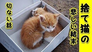 【感動 泣ける話 猫】子猫の姉妹で寄り添って生きてきた猫達の悲しい結末(猫 感動 泣ける話 保護 涙腺崩壊 感涙 動物 動画 里親)招き猫ちゃんねる