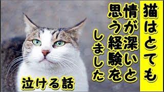 【感動 泣ける話】猫は情が薄いと言われますが死んだ後でも飼い主に愛着を抱く愛情深い動物だと思う様になりました(猫 感動 泣ける話 保護 涙腺崩壊 感涙 動物 動画 里親)招き猫ちゃんねる