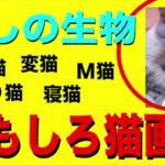 癒しのオモシロ猫特集