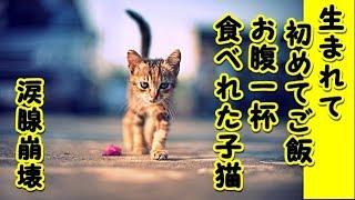 【感動 泣ける話 猫】生まれて初めてお腹一杯 ご飯食べれて良かったね(泣)(猫 感動 泣ける話 保護 涙腺崩壊 感涙 動物 動画 里親)招き猫ちゃんねる