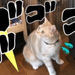 猫が落雷にパニック!! ドリフトで逃げる一部始終 – Cats scared of thunder –