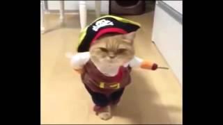 【猫コスプレ】 海賊になりきるネコ