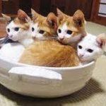 「猫 動画 人気」何度見ても飽きない、おもしろカワイイ猫・犬・動物動画まとめ #1「犬・猫 動物大好きチャンネル」