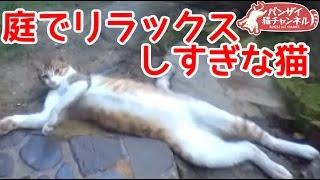 庭でリラックスしすぎな猫。ビヨヨーン。【猫、おもしろ、かわいい】Relaxing too, such cat in the garden