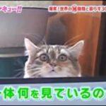 【びっくり顔ネコ】 隠れながらも中を見たい猫の顔が面白すぎる