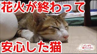 花火が終わって安心する猫。ビックリしたにゃ!テロが起こったかと思ったにゃ!