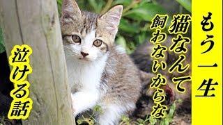 👀【猫 泣ける話】もう一生猫なんて飼わないからな・お前を最後にするからなバカやろう・招き猫ちゃんねる