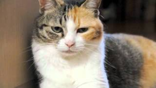 壁によりかかることに失敗した猫 a cat failed and felt awkward