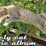 猫ちゃんのおもしろジャンプ!びっくりした表情に思わずキュン死♡