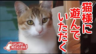 実家に帰省したらバンザイ猫アイちゃんに拒否られた(8月帰省編2)