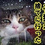 👀【感動 泣ける話 猫】天使の鳴き声・子猫と猫嫌いのオヤジとの 心暖まるお話【感動 泣ける話 動物 猫】動画 里親・招き猫ちゃんねる
