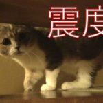 震度3の地震にびっくりする猫たち Earthquak