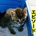 【感動 泣ける話】子猫のトイレで感心した話(猫 感動 泣ける話 保護 涙腺崩壊 感涙 動物 動画 里親)招き猫ちゃんねる