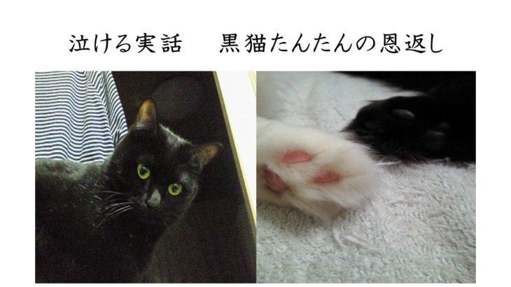 泣ける動画 猫の恩返し【涙腺崩壊】実話 たんたん、ありがとうねThat is a sad story.