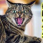 【猫 泣ける話】動物病院・猫が大好きな若い先生・こんな先生いるんだな感動するわ(猫 感動 泣ける話 保護 涙腺崩壊 感涙 動物 動画 里親)招き猫ちゃんねる