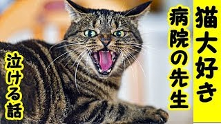 👀【猫 泣ける話】動物病院・猫が大好きな若い先生・こんな先生いるんだな感動するわ(猫 感動 泣ける話 保護 涙腺崩壊 感涙 動物 動画 里親)招き猫ちゃんねる