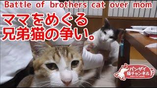 なついた元野良猫兄弟が家に遊びに来ました。兄弟で会話をしています。【猫、おもしろ、かわいい】