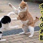 👀【感動 泣ける話 猫 】捨て猫一年かけて迷いに迷い帰ってきた猫のポッケのお話 (猫 感動 泣ける話 保護 涙腺崩壊 感涙 動物 動画 里親)招き猫ちゃんねる