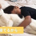 空気を読んで…弟思いな心優しい猫ちゃん 【PECO TV】