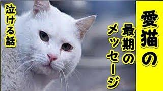 👀【感動 泣ける話 猫 】死んだ愛猫の最後のメッセージ・最愛の飼い主への思いを胸に逝った猫の物語・・・(感動 保護 涙腺崩壊 感涙 動物 動画 里親)招き猫ちゃんねる