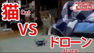 猫vsドローン。猫にドローンを持っていかれそうになりました。Cat vs Drone.