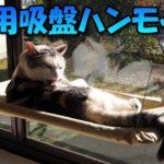 窓用のハンモックで暖かい日差しを浴びる猫 Cat hammock for windows
