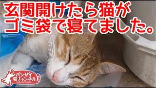 玄関開けたら猫がゴミ袋で寝てました。遊びつかれて寝ちゃったようです。