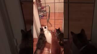 猫びっくり !ヘビのおもちゃに超ビビリ