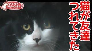 【猫おもしろかわいい】勝手に友達を家につれてくる猫。僕の家においでよ~とでも言いたげである。