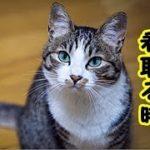 【猫 泣ける話】猫を看取る最期の瞬間までたくさんお話をしてあげてください(猫 感動 泣ける話 保護 涙腺崩壊 感涙 動物 動画 里親)招き猫ちゃんねる