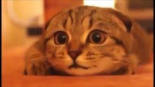 Cute funny cat《オモシロかわいい猫》  2 ホラー映画を見ているネコ