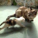 子猫、初めて本物の猫を見る