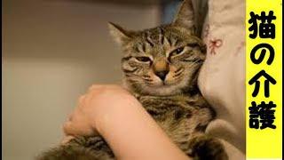 👀【猫 介護】死ぬ前日の夜は頭をスリスリ甘えてきました、最期まで一緒にいれて幸せでした(猫 感動 泣ける話 保護 涙腺崩壊 感涙 動物 動画 里親)招き猫ちゃんねる