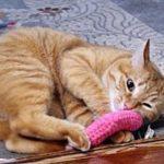 【猫 泣ける話】糖尿病の介護看取り・貴重な時間を沢山くれた猫さんに心から感謝です(猫 感動 泣ける話 保護 涙腺崩壊 感涙 動物 動画 里親)招き猫ちゃんねる