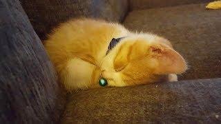 手が大きくてカワイイ猫を保護。