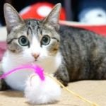緊急速報にびっくりする猫