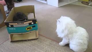 【猫・おもしろ映像】びっくり!発射まで3,2,1・・・・