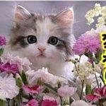 👀【感動 泣ける話】猫の転生・全ての傷ついた飼い主さんに見て欲しい動画・猫達はこうやって天国からやってきたのかな?『ねこが下界に降りるまで』(ペットロス猫 感動 招き猫ちゃんねる)