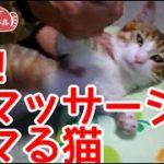 猫マッサージにハマった猫2。肩凝りを解消します。Cat addicted to cat massage2