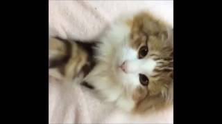 【可愛い】猫好き必見!カワイイ・癒される猫動画まとめ
