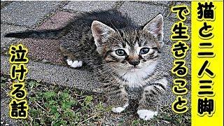 👀【猫 泣ける話】猫と二人三脚・猫はあなたを微笑ませる ためだけにやってくるのだ(猫 感動 泣ける話 保護 涙腺崩壊 感涙 動物 動画 里親)招き猫ちゃんねる