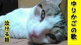 👀【感動 泣ける話猫 】ゆりかごの歌・赤ちゃん猫の頃から抱いていつも歌ってあげていた唄(猫 感動 泣ける話 保護 涙腺崩壊 感涙 動物 動画 里親)招き猫ちゃんねる