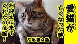 👀【感動 泣ける話 猫】不思議な話・愛猫が亡くなった時お迎えに来て先導してくれた人は誰なのでしょうか?【泣ける話 感動 動物 子猫 2ちゃんねる ペットロス】動画 里親・招き猫ちゃんねる