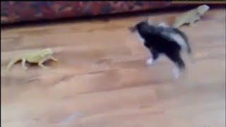 【おもしろ猫動画!!】 トカゲにびっくりして逃げ出す子猫♪  Funny cat video