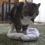 ねずみを捕まえたねこ。- Maru caught the mouse(toy).-