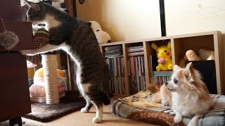 猫の行動にびっくりした犬