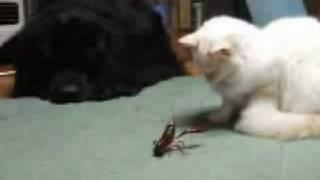猫 VS ザリガニのガチンコ対決!