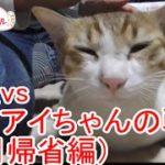 実家に帰省したらバンザイ猫アイちゃんに拒否られた(8月帰省編)