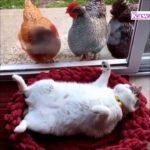 「おもしろ猫」かわいい猫ちゃんのハプニング, 失敗動画集