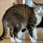 猫のびっくり×2